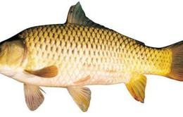 8 lí do tốt để bạn ăn cá nhiều hơn
