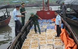 Bắt giữ 40.000 con gà giống nhập lậu ở Quảng Ninh