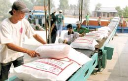 Việt Nam trúng thầu bán 187.000 tấn gạo sang Philippines