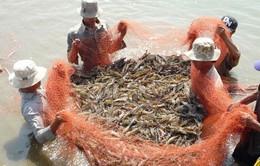 Cảnh báo tình trạng trục lợi bảo hiểm tôm ở Sóc Trăng