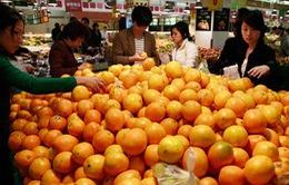Cam Trung Quốc vẫn tràn ngập thị trường