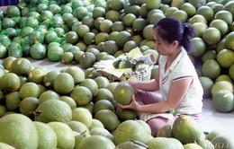 Giá trái cây đặc sản tăng kỷ lục