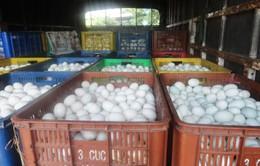 Hải Phòng: Thu giữ 40.000 quả trứng gà không rõ nguồn gốc