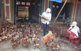 Lạng Sơn: Nhập lậu gia cầm giảm
