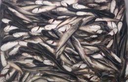 Hà Nội: Bắt 11 vụ vận chuyển thủy sản nhập lậu