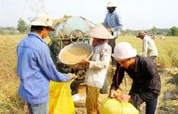 Gạo Việt Nam: Đứng đầu nhưng chưa có thương hiệu