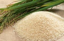 Dự trữ gạo toàn cầu ở mức cao nhất trong 12 năm