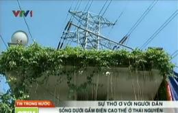 Thái Nguyên: Dân sống thấp thỏm dưới đường điện cao thế