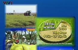 Giảm diện tích trồng lúa hay thay đổi tư duy làm nông nghiệp?