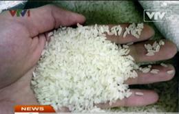 TP.HCM: Chưa phát hiện gạo có hóa chất, trà bẩn