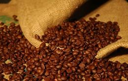 Doanh nghiệp lùng mua cà phê giá thấp để tạm trữ
