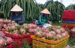 Lập Ban chỉ đạo về xuất khẩu rau, hoa, quả