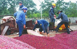 DN xuất khẩu nông sản muốn bỏ thuế VAT