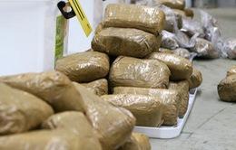 Australia bắt giữ hơn 200kg ma túy đá