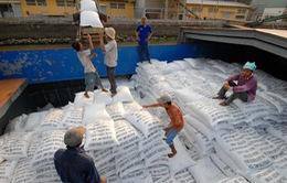 Xuất khẩu gạo có nguy cơ mất thị trường truyền thống