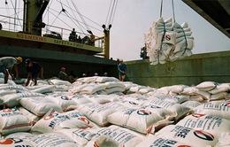Xuất khẩu tiểu ngạch tăng vọt, giá lúa ĐBSCL tăng 4 tuần liên tiếp