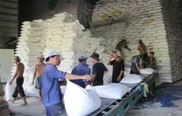 Tỷ lệ hợp đồng xuất khẩu gạo Chính phủ giảm mạnh