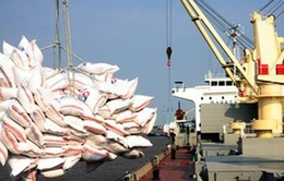Xuất khẩu gạo tiểu ngạch sẽ tiếp tục tăng