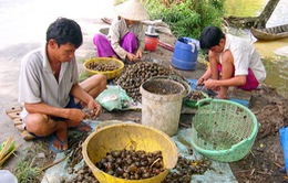 VIDEO: Những kiểu thu mua nông sản bất thường
