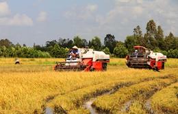 Lần đầu tiên giá trị sản xuất nông nghiệp ĐBSCL sụt giảm