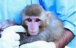Iran lần thứ hai đưa khỉ vào không gian thành công