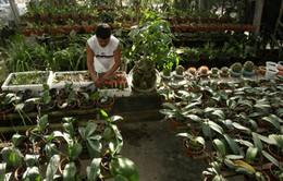 Lúng túng xây dựng thương hiệu hoa cây cảnh Hội An