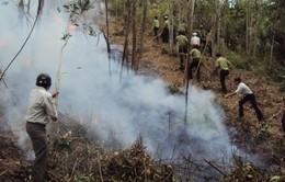 Khô hạn kéo dài, cấp bách phòng chống cháy rừng