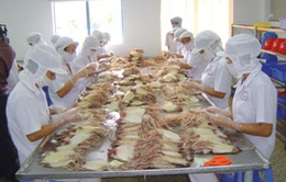 VASEP: Thiếu mực, bạch tuộc để chế biến xuất khẩu