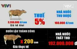 """Bò """"một giá"""" và nguy cơ thất thu thuế"""