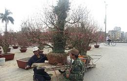 Sôi động dịch vụ cho thuê cây kiểng dịp Tết