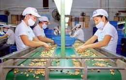 Việt Nam dẫn đầu về xuất khẩu hạt điều 8 năm liền