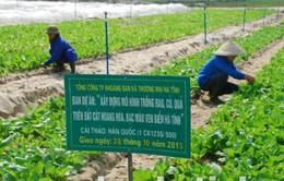 Hà Tĩnh trồng rau xanh trên vùng cát bạc màu