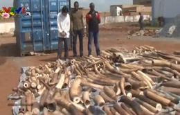 Togo thu giữ gần 4 tấn ngà voi buôn lậu sang Việt Nam