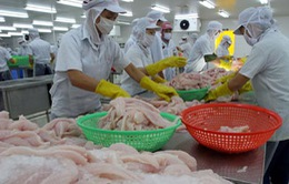 Mỹ lại tăng thuế đối với cá da trơn nhập khẩu từ Việt Nam