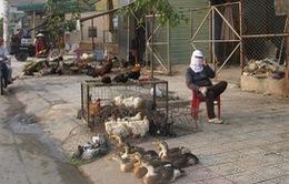 TP.HCM: Tràn lan mua bán gia cầm sống chưa qua kiểm dịch