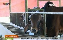 Bộ Tài chính chấn chỉnh hoạt động buôn lậu bò qua biên giới