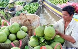 ĐBSCL trồng thêm 10.000ha cây ăn quả chất lượng cao