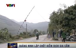 Quảng Ninh ngăn chặn quyết liệt gia cầm không rõ nguồn gốc