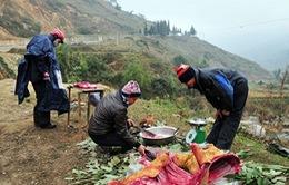 Lào Cai: Trâu bò chết rét, người dân mang ra đường bán
