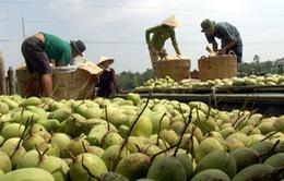 ĐBSCL gia tăng sản lượng xuất khẩu rau quả