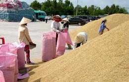 Giá gạo nguyên liệu tăng mạnh