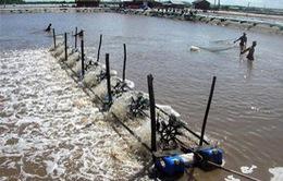 Đa dạng hóa vật nuôi - Hướng nuôi trồng thủy sản bền vững