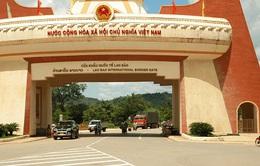 Tạm ngưng nhập khẩu trâu bò qua Lao Bảo