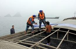Cảnh sát biển bắt giữ 2 tàu vận chuyển 2.300 tấn than trái phép