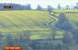 Đất nông nghiệp của nước Anh thu hút nhà đầu tư