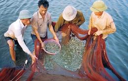 Kiểm soát môi trường nuôi thủy sản mùa nắng nóng