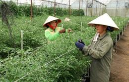 Giải pháp nào cho nhu cầu vốn đầu tư nông nghiệp công nghệ cao?