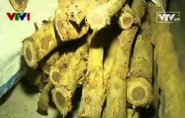 Khánh Hòa bắt giữ 700 kg gỗ trắc dây vận chuyển trái phép