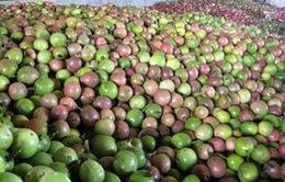 Doanh nghiệp Việt Nam thiếu chanh dây tươi xuất khẩu