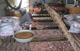 Nuôi cá điêu hồng lồng bè tại Tiền Giang thu lãi cao